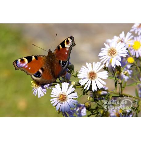 Fleurs à papillons