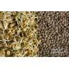 Graines à germer Lentilles Non mucilagineuses