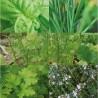Graines bio de plantes aromatiques en coffret pour jardin à l'école