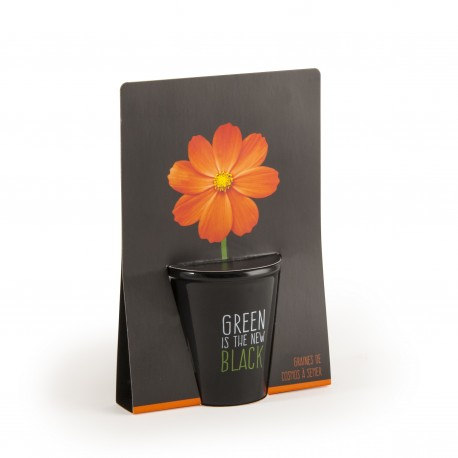 Kit de plantation black - Cosmos orange