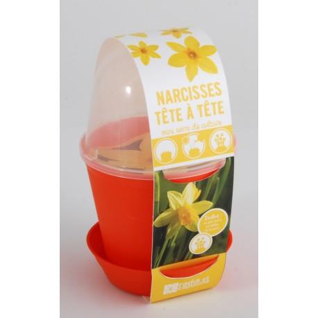 Pot cloche Narcisses parfumées