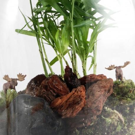 Elans dans une forêt de palmiers en terrarium