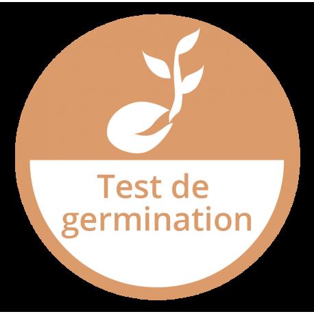 Test de germination