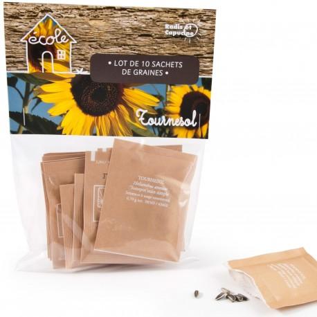 Dwarf sunflower seeds for the school garden