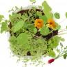 Coffret Jardinier en herbe