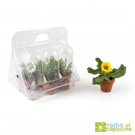 Serre en plastique semis de fleurs