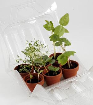 cultiver les plantes aromatiques planter cultiver les plantes aromatiques livre herbes et. Black Bedroom Furniture Sets. Home Design Ideas