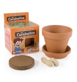 graines-de-cacahuetes-en-pot-de-culture-pour-enfants