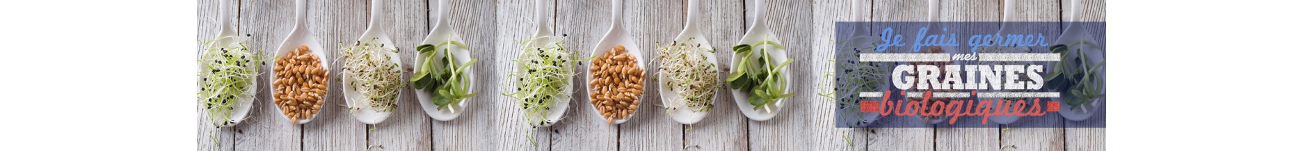 Sprouting seeds tutorials