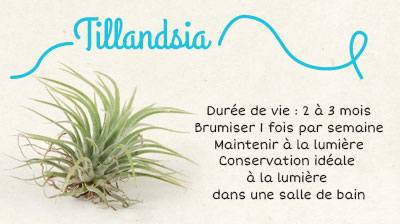 sautoir fille de l 39 air avec un tillandsia. Black Bedroom Furniture Sets. Home Design Ideas